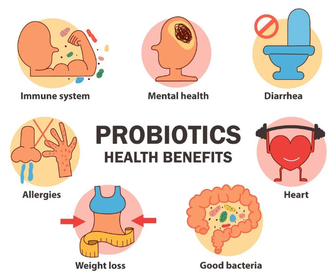 Signs Probiotics Are Working Effectively In Your Body